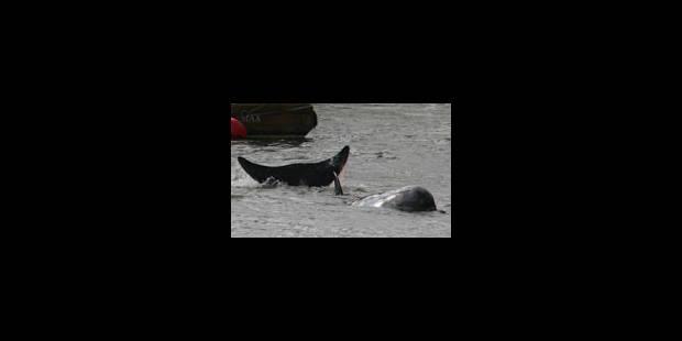 Une baleine dans la Tamise à Londres - La Libre