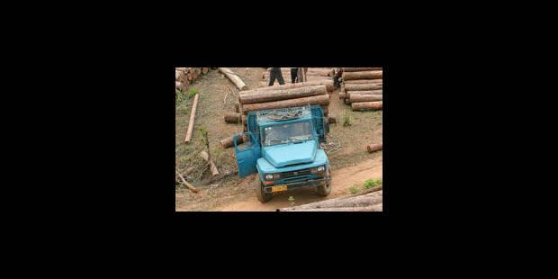 La déforestation s'exporte - La Libre