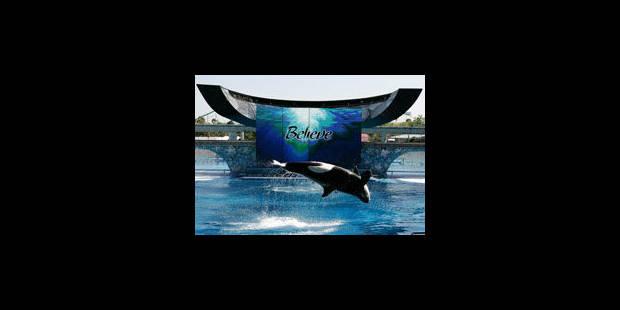 Des orques esclaves à Sea World ? - La Libre