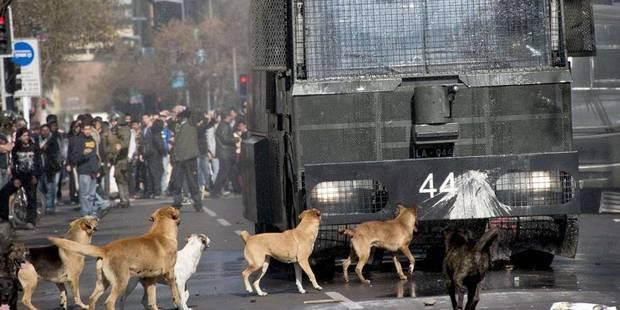 Au Chili, les chiens errants manifestent aussi - La Libre
