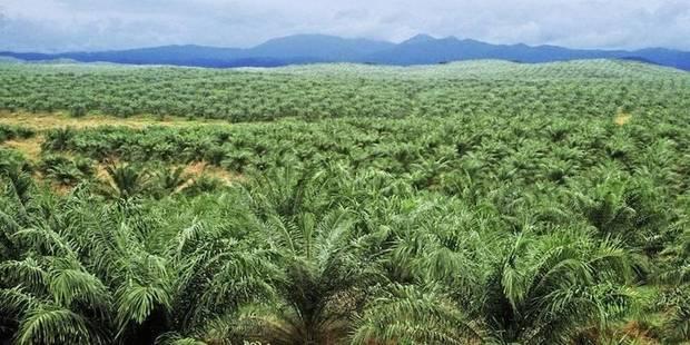 Feu sur l'huile de palme - La Libre