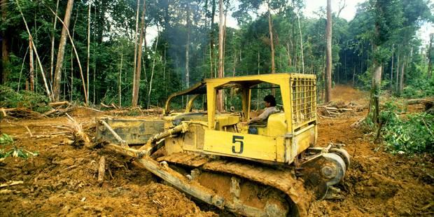 Oreos et Gilette accélèrent... la déforestation - La Libre