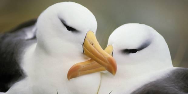 Près de 200 espèces d'oiseaux proches de l'extinction dans le monde - La Libre