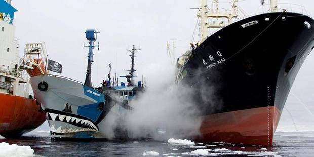 Les pirates de l'écologie repartent à l'abordage - La Libre