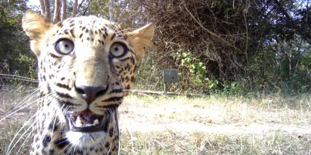 Les animaux sauvages se mettent au selfie - La Libre