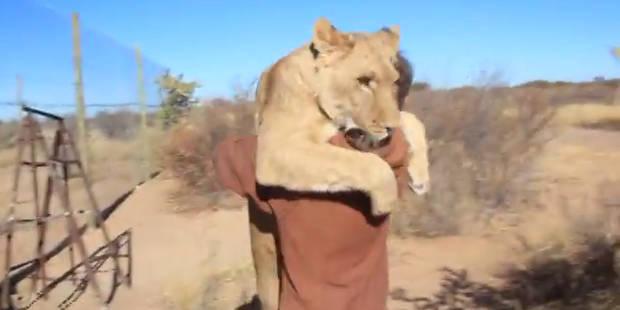 Quand un lion se jette sur un homme... pour lui faire un câlin - La Libre