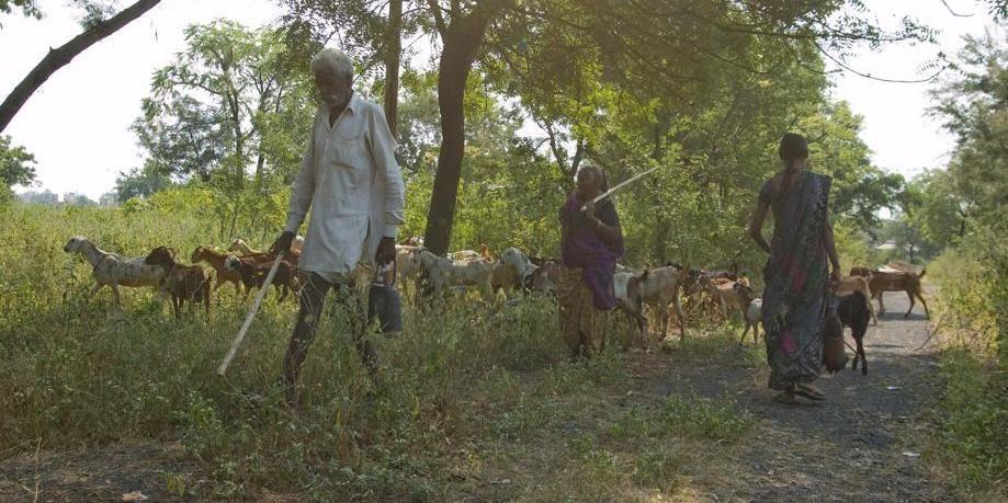 A Bhopal, le cadavre de l'usine chimique pollue toujours - La Libre