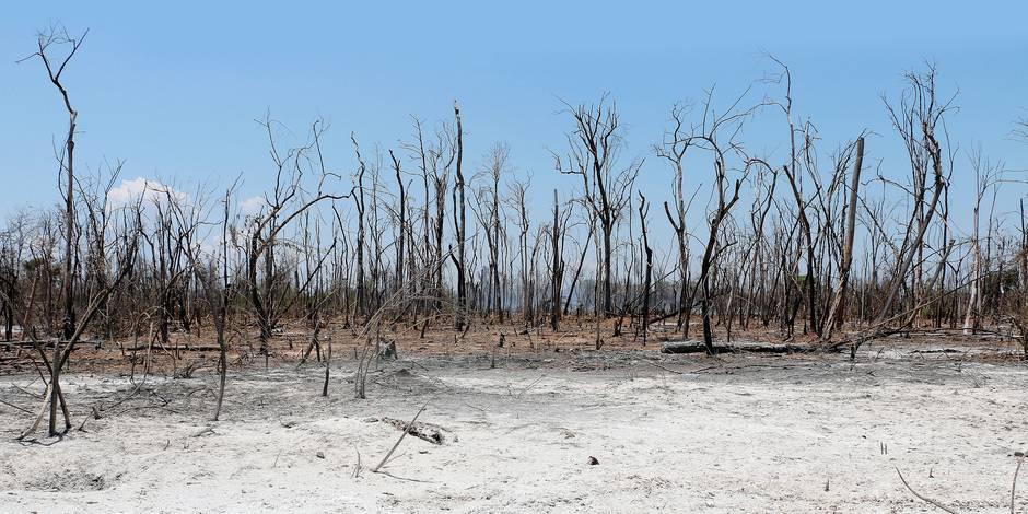 Pour sauver le climat, il faut protéger les forêts - La Libre
