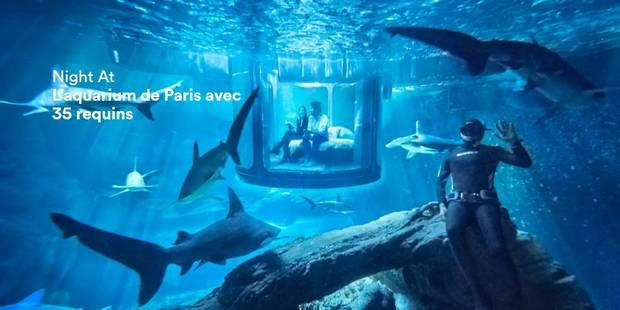 Une nuit au milieu des requins à Paris: l'offre insolite d'Airbnb - La Libre