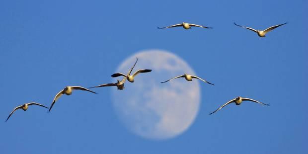 Un ancien scénario pour la formation de la Lune refait surface - La Libre
