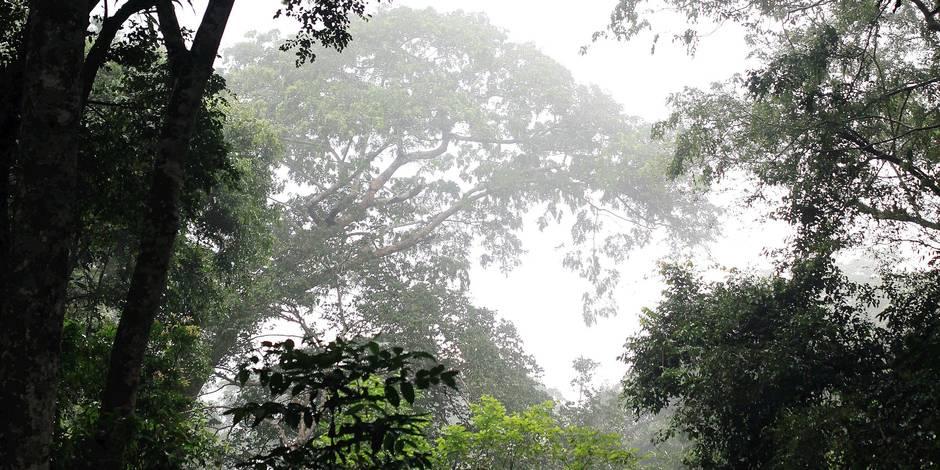 Pour se régénérer, certaines forêts ont besoin d'une présence humaine - La Libre