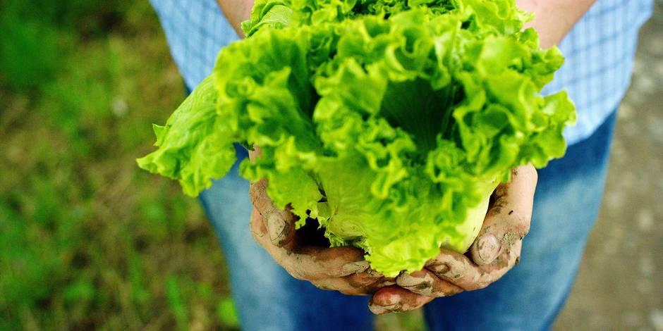En Wallonie, 4% des aliments sont désormais bio - La Libre