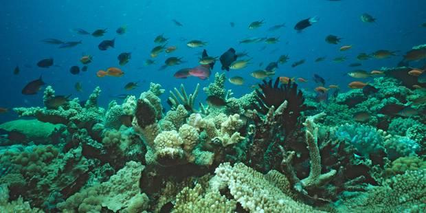 La Grande Barrière de corail est estimée à 37 milliards d'euros: faut-il donner un prix à la nature ? - La Libre