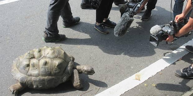 Japon: une tortue géante retrouvée à 140 mètres du zoo après une escapade de deux semaines - La Libre