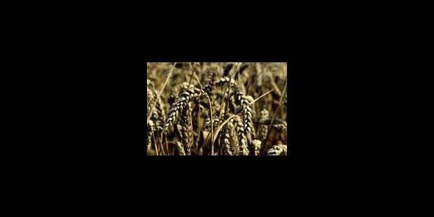 OGM expérimentaux sous influences? - La Libre