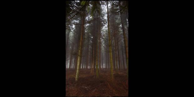 Début des fouilles dans un bois de Sart-Custinne - La Libre