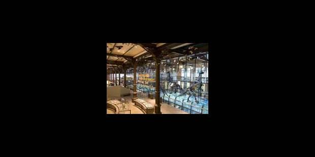 250 ans de Sciences naturelles en Belgique - La Libre