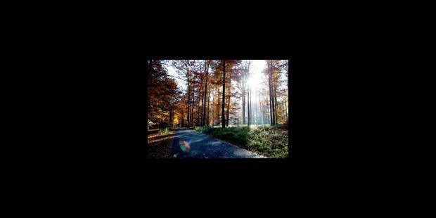 Les hêtres de la forêt de Soignes sont menacés - La Libre