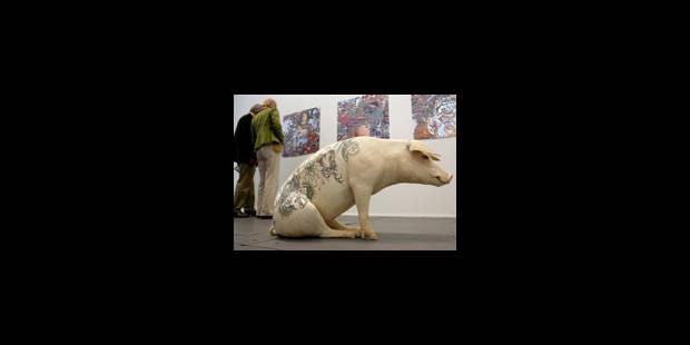 Les cochons tatoués de Delvoye créent la polémique - La Libre