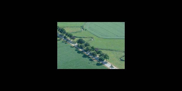 Agroforesterie, révolution verte