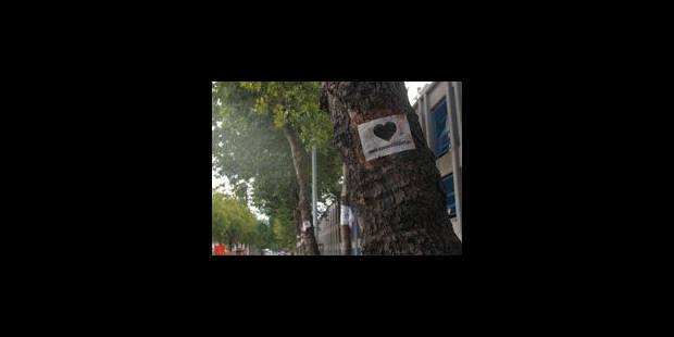 Avenue du Port: refus de lever des scellés sur les platanes et pavés - La Libre