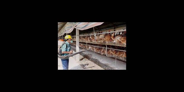 Premier décès de la grippe aviaire en un an et demi en Chine - La Libre