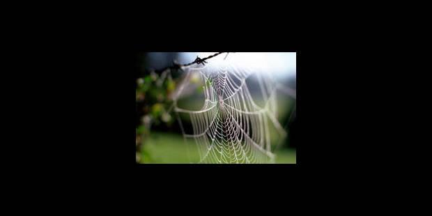 Un gilet pare-balles en soie d'araignées, possible?