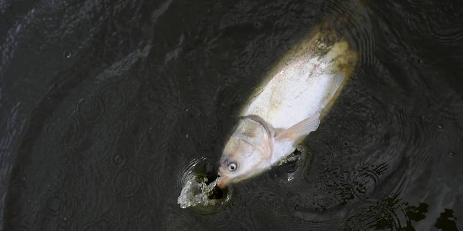 Des poissons pour trouver les cadavres