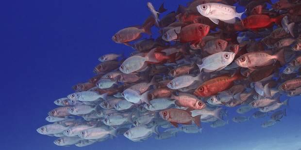 La surpêche pourrait totalement vider nos océans - La Libre