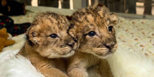 Est-il éthique de garder des animaux sauvages en captivité? - La Libre