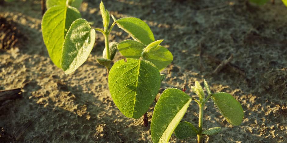 Le 13 août, nous aurons consommé ce que la Terre est capable de produire en un an