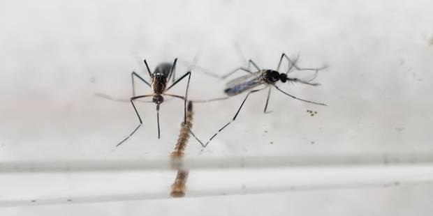 Infection au virus Zika : Possible en Belgique ? - La Libre