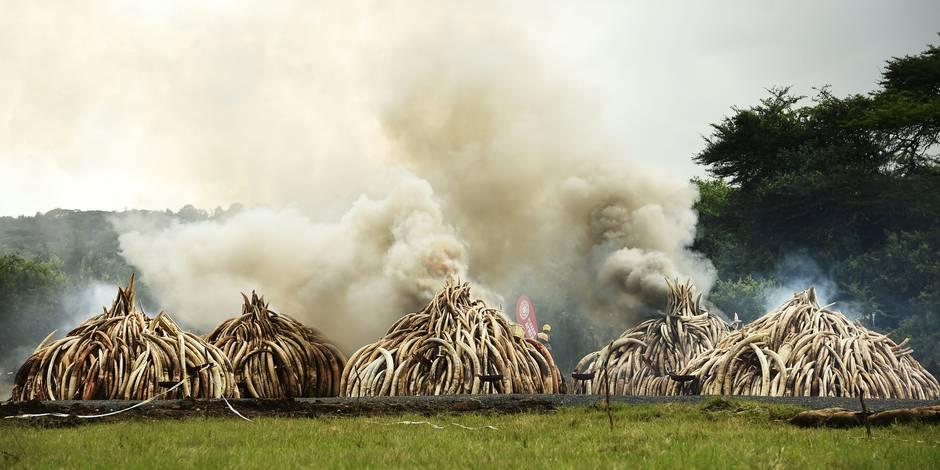 Le Kenya détruit la plus grande quantité d'ivoire de l'histoire