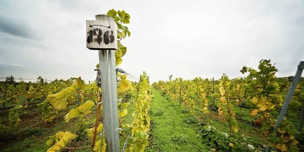 Liège: la Province se lance dans la promotion du vin liégeois - La Libre
