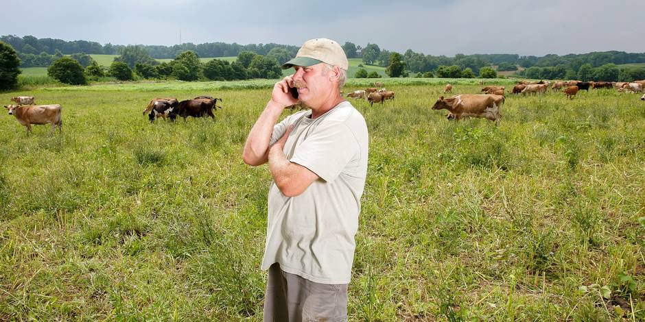 Farmer on cell phone with cows in the background; Long Green, Maryland, United States of America Reporters / Design Pics