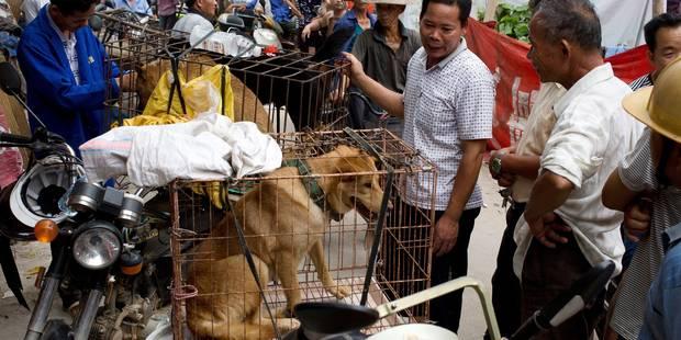 10.000 chiens abattus lors du très controversé festival chinois de viande de chien à Yulin - La Libre