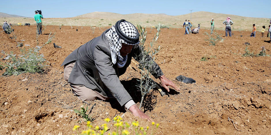 JERICHO, WEST BANK - APRIL 2 : Palestinian and foreign activists, plant olive trees to mark the 40th anniversary of Land Day in Jericho, West Bank on April 2, 2016. Issam Rimawi / Anadolu Agency Reporters / Abaca