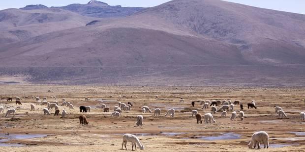 Le bilan du séisme au Pérou revu à la baisse, quatre décès - La Libre