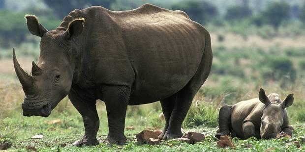 L'UE veut intensifier la lutte contre le trafic d'espèces sauvages - La Libre