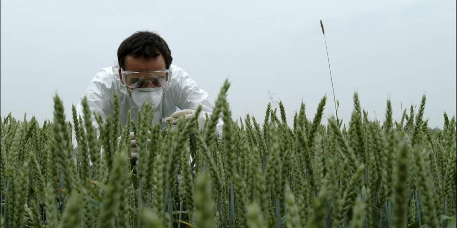 Monsanto sur le banc des accusés - La Libre
