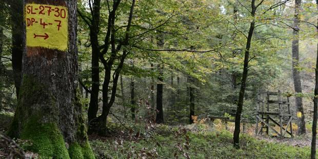 Les forêts, le bon plan pour les investisseurs ? - La Libre