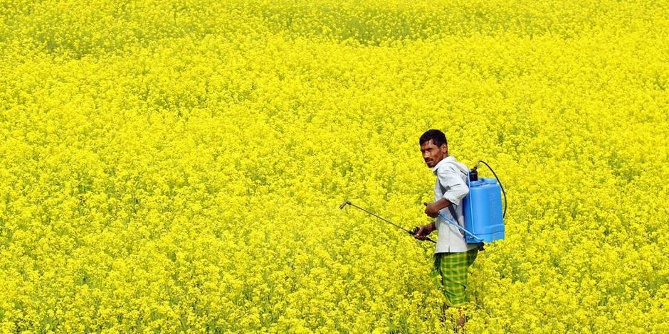 L'Inde divisée sur les OGM (REPORTAGE) - La Libre
