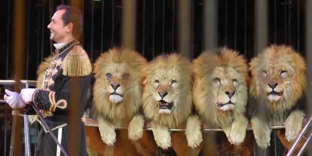 Les animaux sont-ils mieux au zoo qu'au cirque ? (RIPOSTES) - La Libre