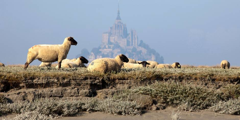 The Bay of Mont Saint Michel (50) : breeding of salt meadow lambs on the grazing lands and Mont St Michel surrounded by fog at low tide. UNESCO World Heritage Site; medieval art; religious building; spiritual life Reporters / Andia *** Local Caption ***