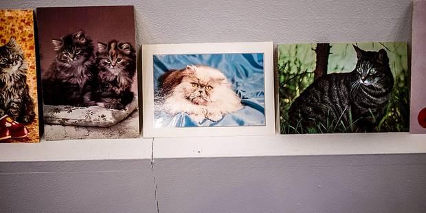 Le chat amuse la galerie - La Libre