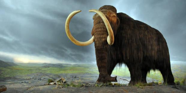 Créer un hybride éléphant-mammouth, un projet éthiquement contestable (OPINION) - La Libre