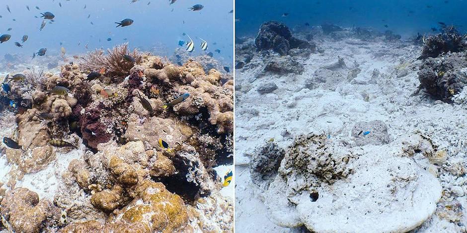 Un bateau de croisière a détruit des récifs coralliens : au moins 10 ans de restauration - La Libre