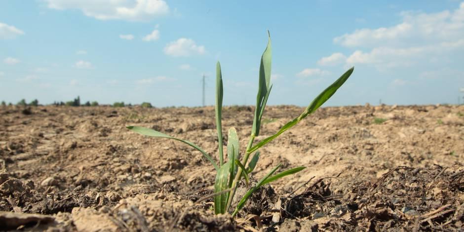 En Belgique, la sécheresse dure en fait depuis dix mois (INFOGRAPHIE)