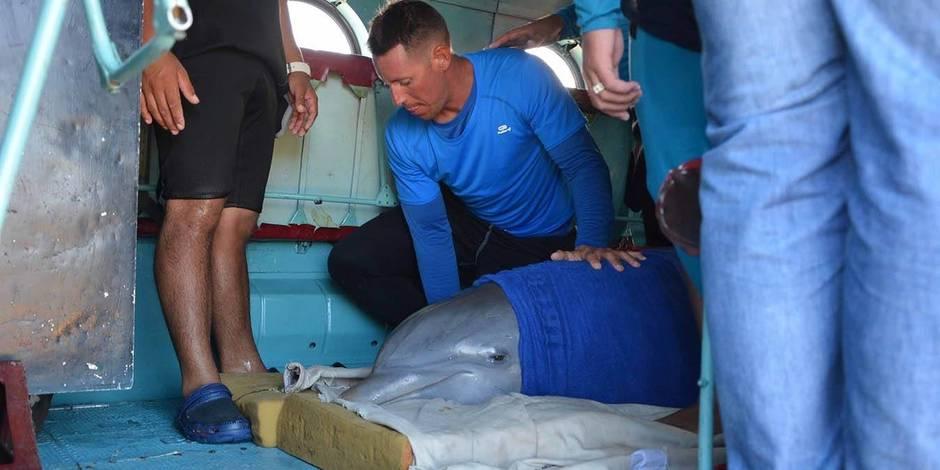Ouragan Irma: des dauphins évacués par hélicoptère à Cuba (PHOTOS)