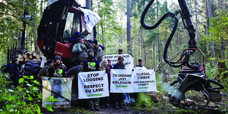 La Pologne abat la dernière forêt naturelle d'Europe